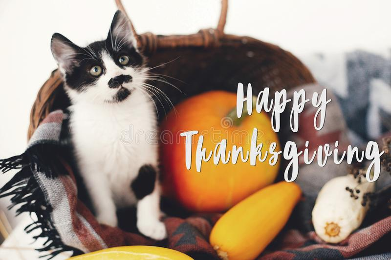 Happy Thanksgiving text, seasons greeting card. Thanksgiving sign. Cute kitty, pumpkin, wicker basket on wooden background. Cat stock photos