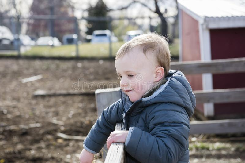 Toddler Boy Visiting a Local Urban Farm Looking at Horses in a Paddock. Happy Toddler Boy Visiting a Local Urban Farm Looking at Horses in a Paddock stock images