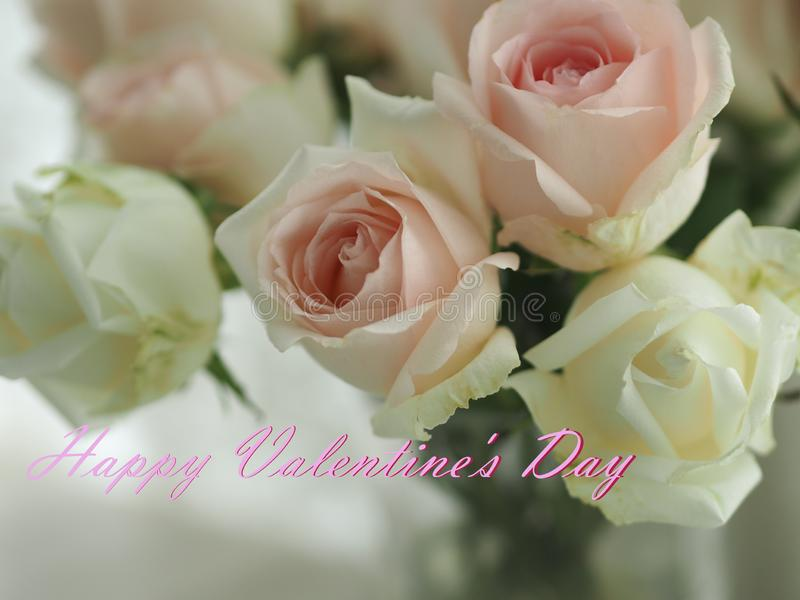 Happy Valentine Day pink and white rose flower on blurred white background. Closeup Happy Valentine Day pink and white rose flower on blurred white background stock images
