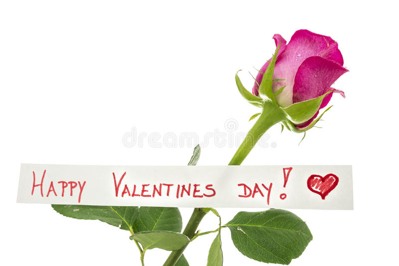 Happy Valentines Day greeting card. With a handwritten message and beautiful single long-stemmed pink rose symbolising love and commitment over white with royalty free stock photography