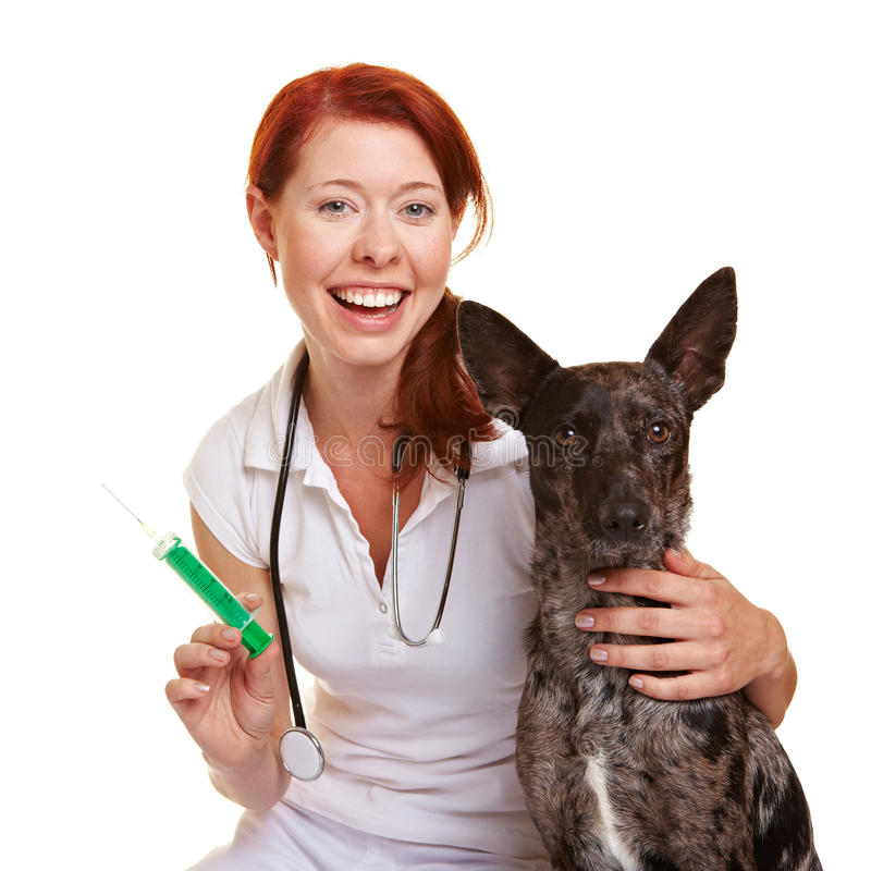 Happy veterinarian with dog stock images