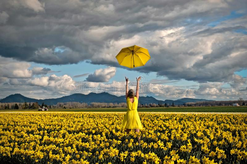Happy woman in daffodil field with yellow umbrella. stock image