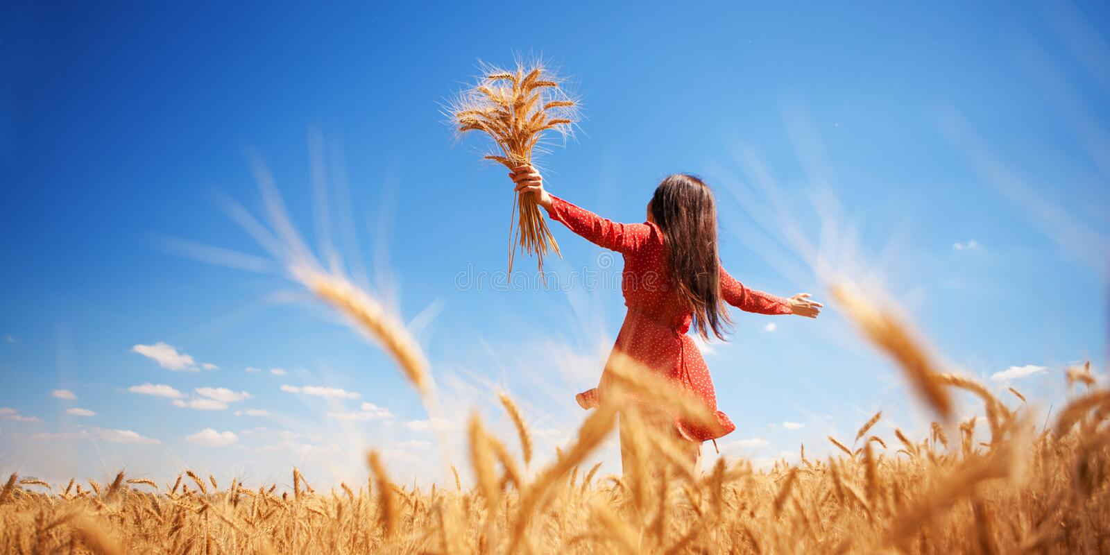 Happy woman enjoying the life in the field Nature beauty, blue sky and field with golden wheat. Outdoor lifestyle. Freedom concept stock photo