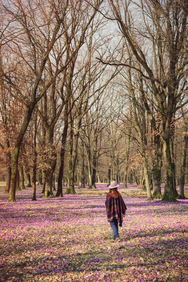 Happy woman enjoying the spring nature and crocus flowers. Happy woman enjoying the nature in the spring forest and feeling free among meadow of beautiful crocus royalty free stock images