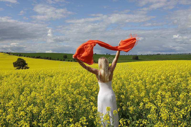 Happy woman flailing scarf in a field of flowering canola in spring stock image