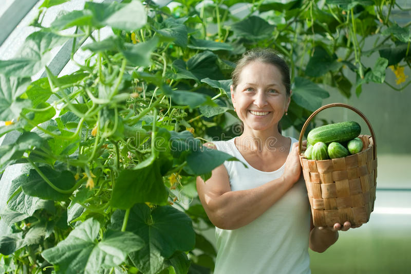 Happy woman with harvested cucumbers royalty free stock photo