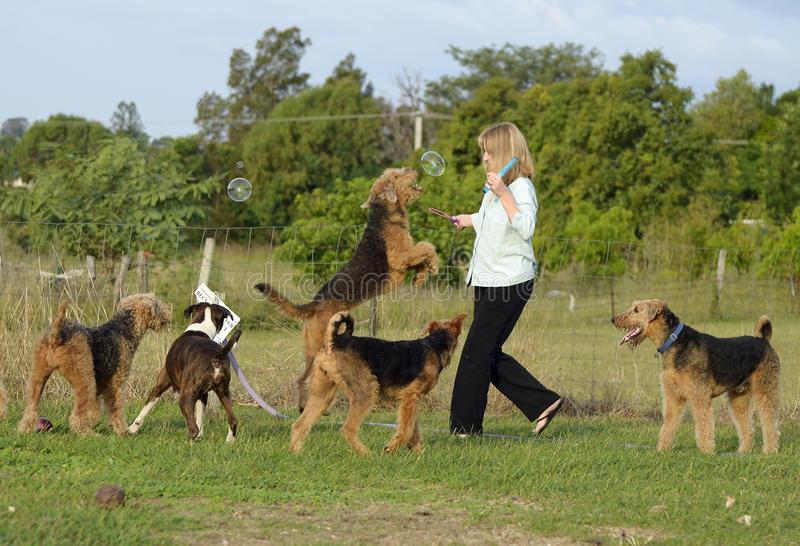 Happy woman having fun playing bubbles with her pet dogs. A fun image of a mature middle-aged woman playing with her beloved companions and best friends, her royalty free stock photo