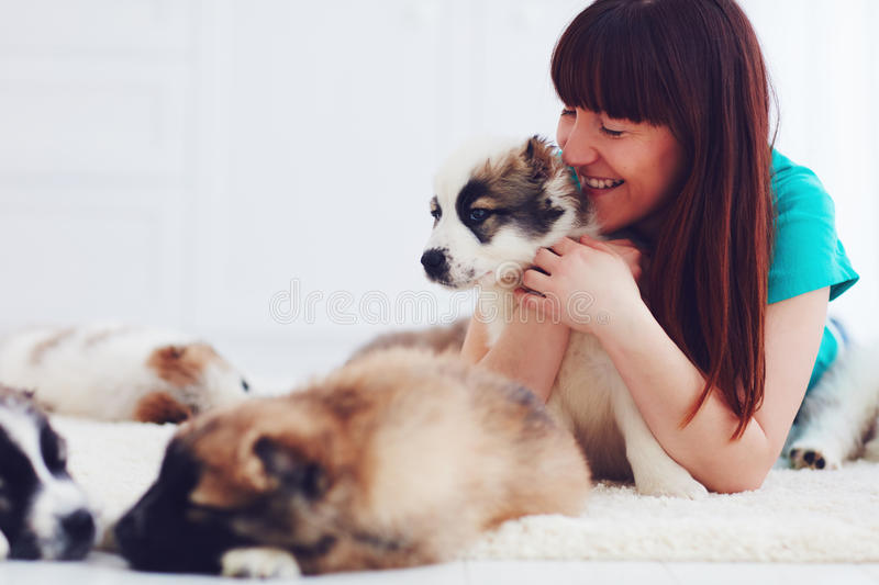 Happy woman lies on carpet with caucasian shepherd puppies. At home royalty free stock photography