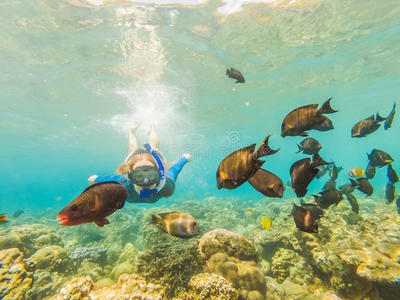 Happy woman in snorkeling mask dive underwater with tropical fishes in coral reef sea pool. Travel lifestyle, water. Sport outdoor adventure, swimming lessons stock photography