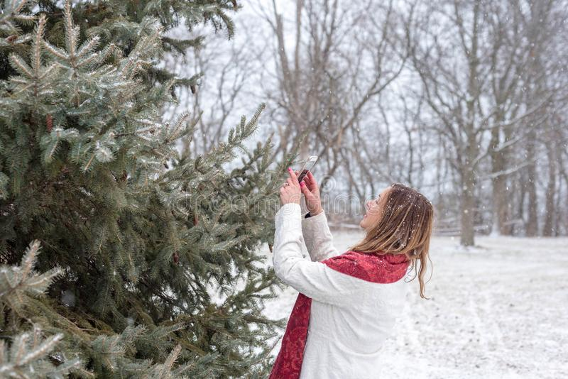 Happy woman taking picture of snow falling on pine tree with smart phone. Woman taking photo of magical big fluffy white snowflakes falling on pine tree branch stock photo