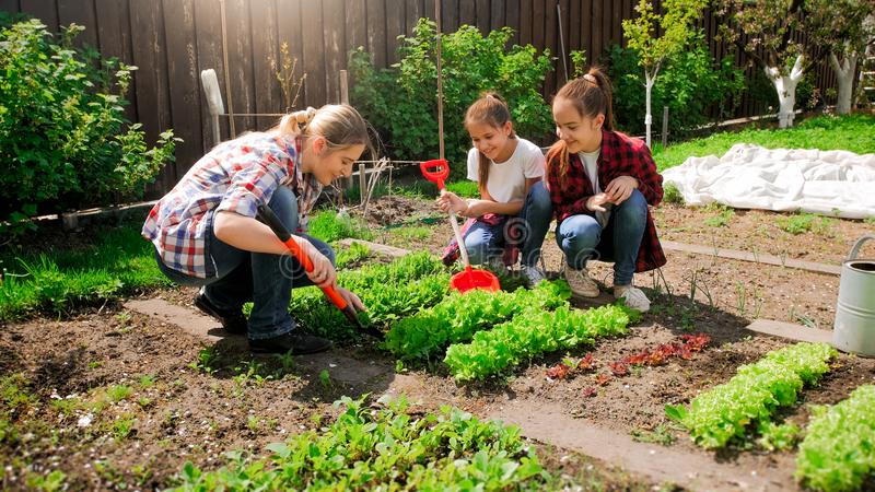 Happy young woman with daughters planting seeds in garden stock photography