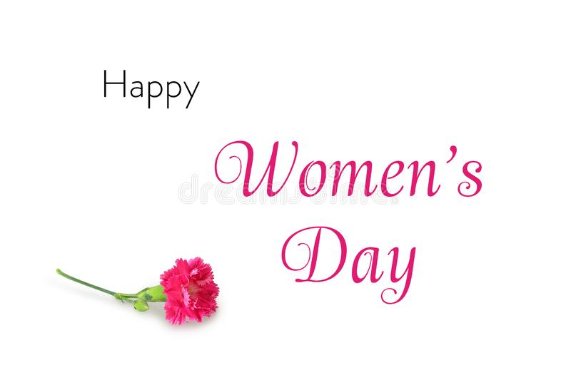 Happy Womens Day card with carnation flower isolated on white background. Happy Womens Day card with pink carnation flower isolated on white background royalty free stock photography