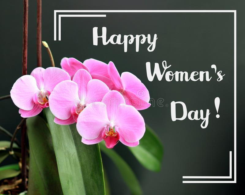 Happy womens day greeting card with pink soft color orchid over dark grey background and white brush hand written font script royalty free stock photo