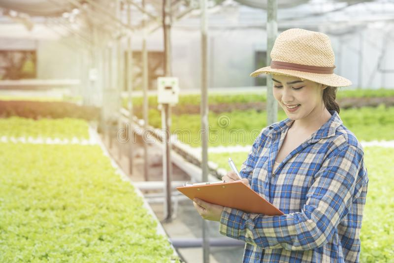 Happy young asian farmer gardener woman standing and checking on document file in fresh green oak organic vegetable in greenhouse stock photos