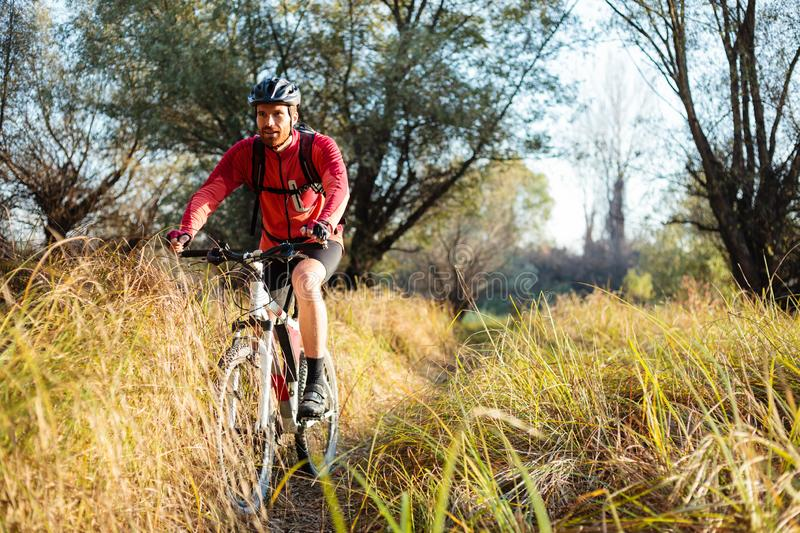 Happy young bearded man riding mountain bike along a path through tall grass royalty free stock images
