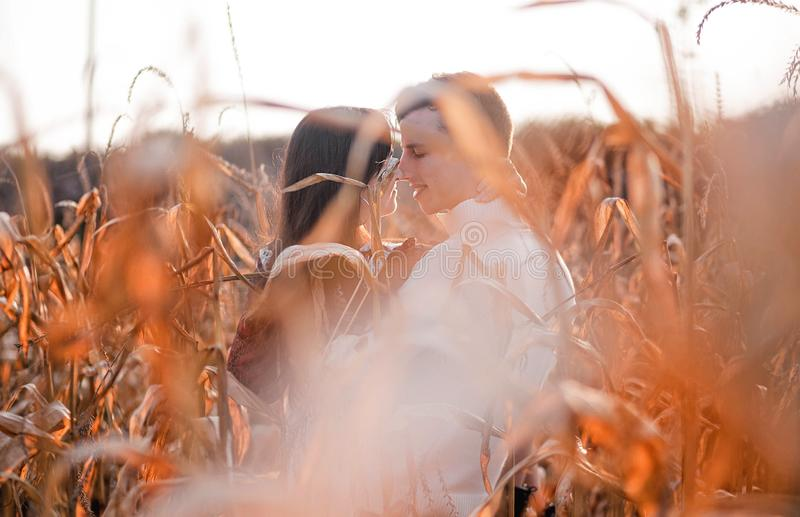 Happy young couple kiss in autumn corn field stock photos