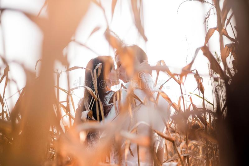 Happy young couple kiss in autumn corn field royalty free stock photos