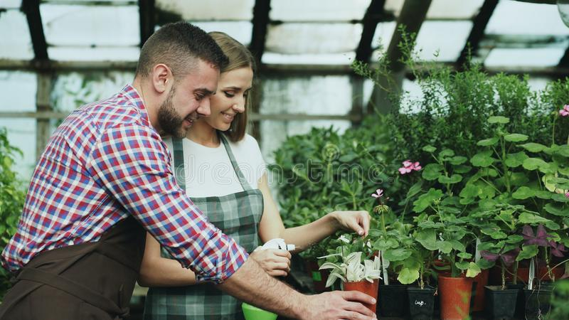 Happy young florist family in apron working in greenhouse. Attractive man embrace his wife while she watering flowers royalty free stock image