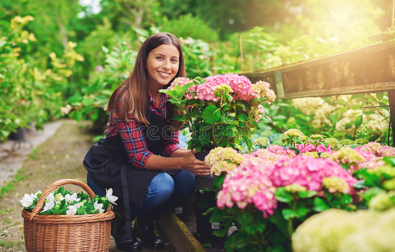 Happy young gardener selecting hydrangea plants. For her garden from the stock at a commercial nursery smiling as she displays her choice to the camera royalty free stock image