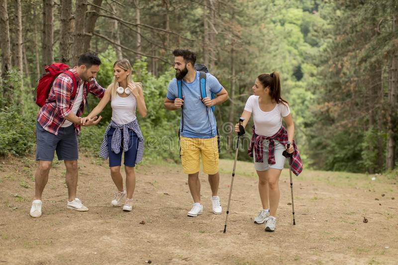 Happy young group hiking together through the forest royalty free stock image