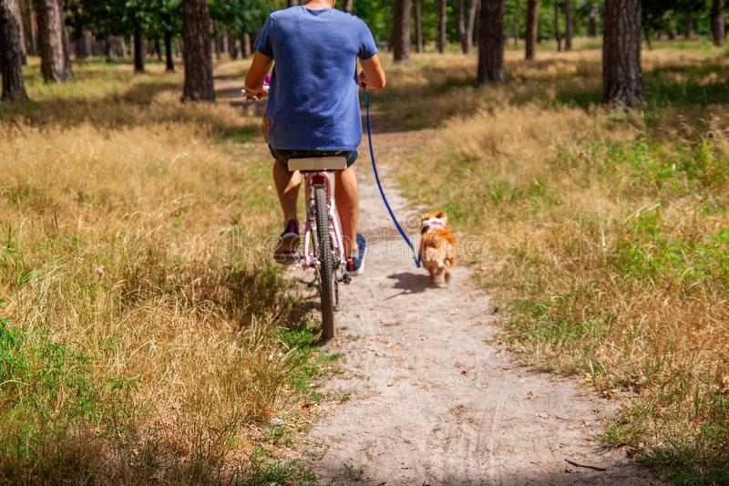 Man on bike in park in the company of his dog. royalty free stock photos