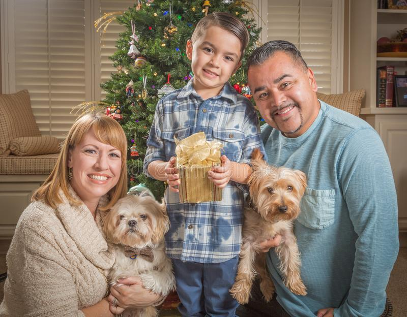 Young Mixed Race Family In Front of Christmas Tree. Happy Young Mixed Race Family and Puppies In Front of Christmas Tree stock photo