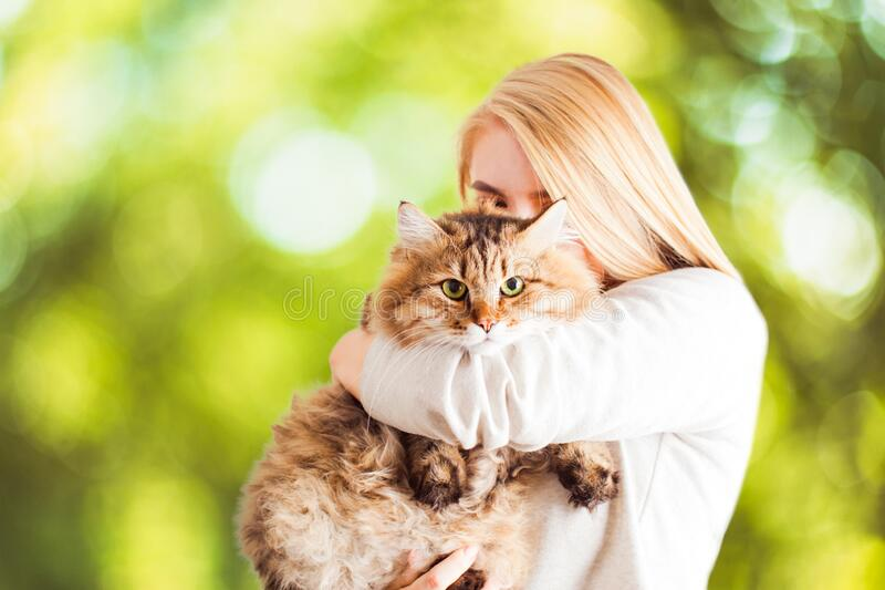 Happy young woman kissing and hugging a siberian cat. Over nature blured background royalty free stock photo