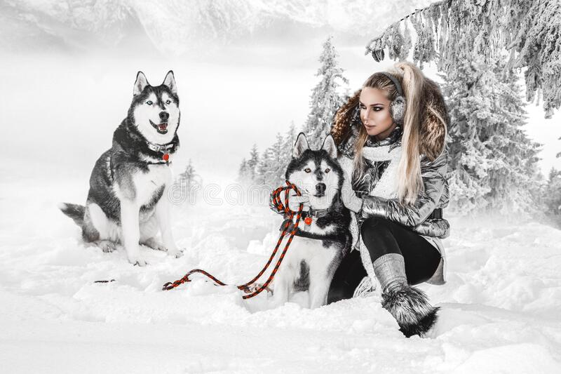 Happy young woman playing with siberian husky dogs in winter day.Attractive young woman with dog. In wintertime outdoor. Amazing landscape stock images