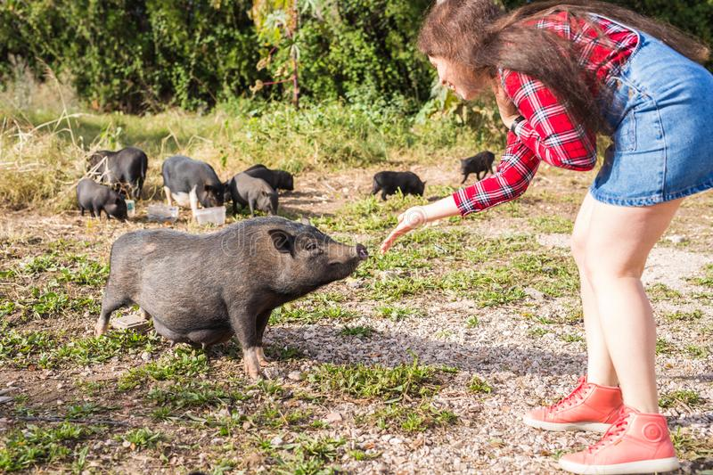 Happy young woman plays with little wild boars on nature. stock images