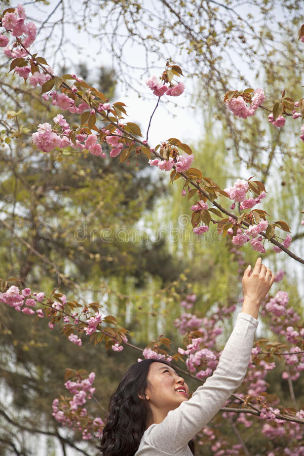 Happy young woman reaching up to touch a flower blossom outdoors in the park in springtime stock image