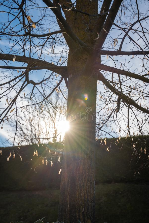 Happyness is there, beside troubles. The sun shine beside branches, like happyness that always comes after any intricate combination of troubles stock photo