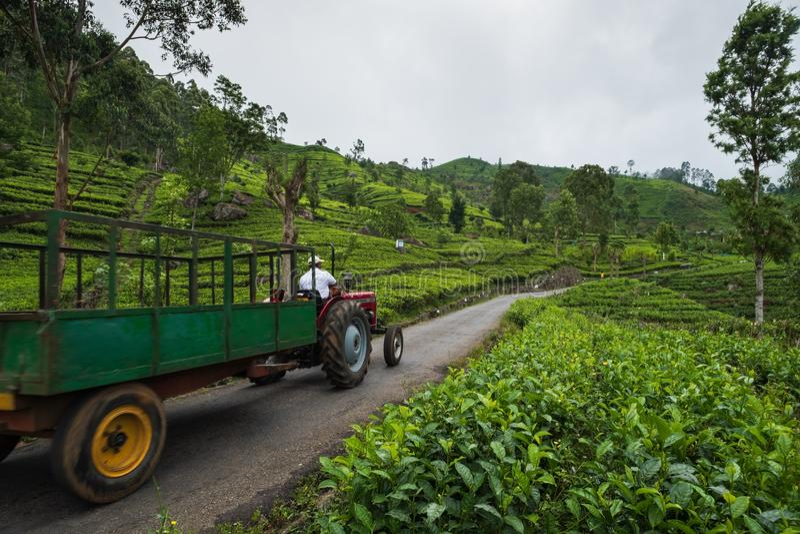 Haputale, Sri Lanka - April 18 2018: landbouwer die oude tractor in aanplanting drijven royalty-vrije stock fotografie