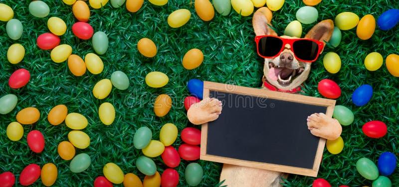 Hapy easter hund med ägg fotografering för bildbyråer