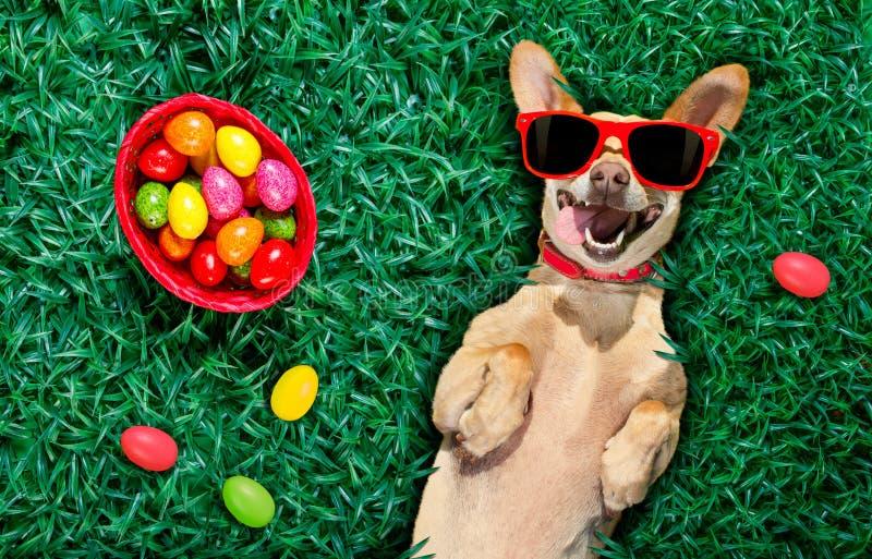 Hapy easter hund med ägg arkivbild