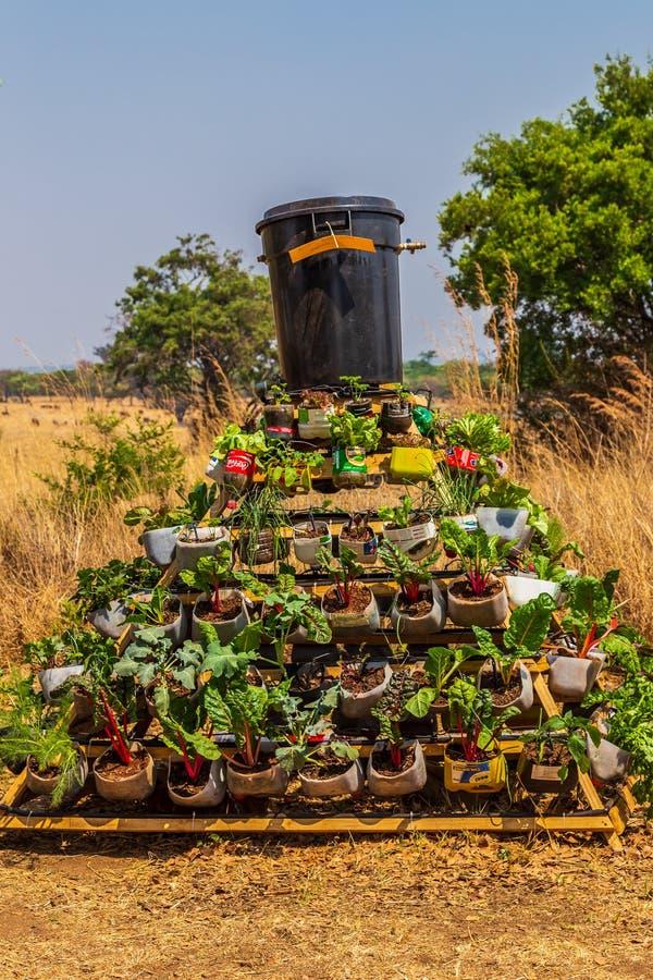 Harare, Zimbabue, 10/10/2015: Competencia de crecimiento sostenible de alimentos imagenes de archivo