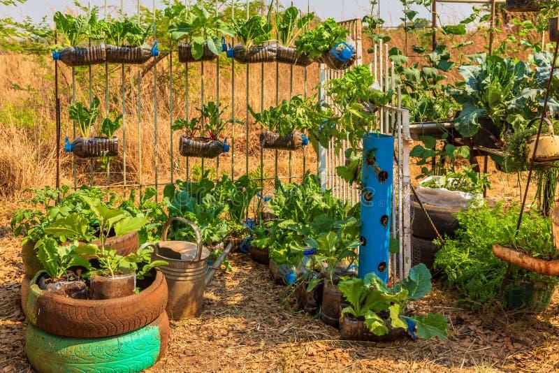 Harare, Zimbabue, 10/10/2015: Participante de una competencia sustentable de crecimiento de alimentos fotografía de archivo