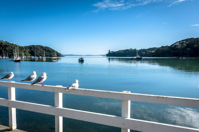 Harbour of Mangonui, New Zealand. Birds and boats at Harbor of Mangonui, New Zealand royalty free stock image