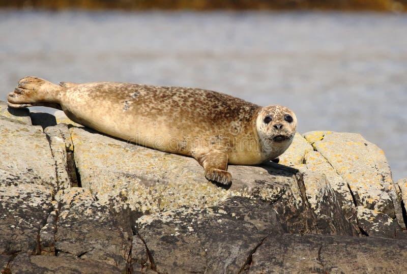 Seal sad look stock image  Image of ocean, sweet, mammal - 1854215