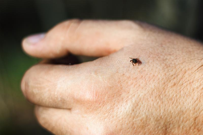 Hard-bodied tick of family Ixodidae on skin of human hand, dangerous mite. Hard-bodied tick of the family Ixodidae on skin of human hand, dangerous mite royalty free stock image