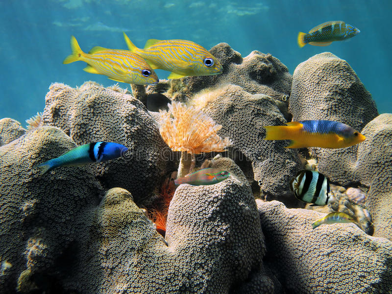 Hard Coral And Colorful Fish Royalty Free Stock Images