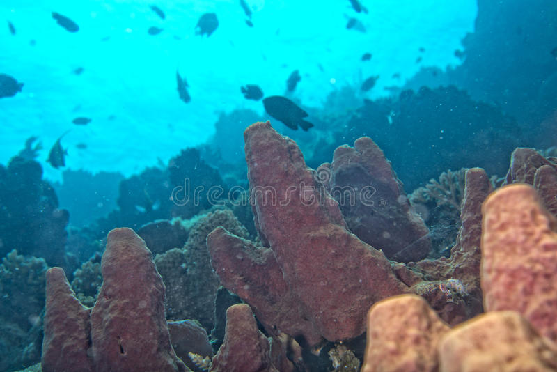 Hard coral macro detail while diving in Indonesia stock photography
