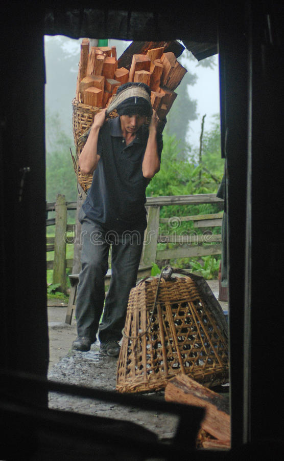 Hard life of the Himalayas. A man coming home after cutting woods from the jungle in Sikkim Himalayas stock images