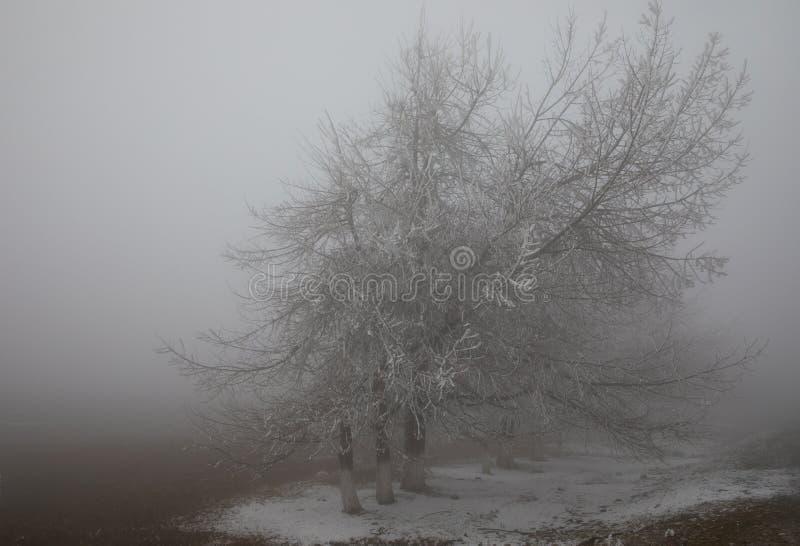 hard rime, frozen tree winter wonderland scenery. freezing fog and Mist background. moisture forming ice royalty free stock photo