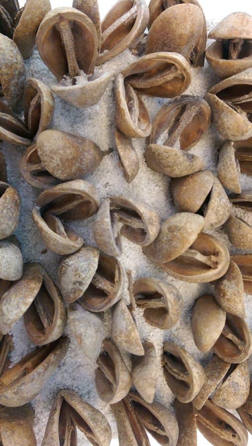 Hard shell of nuts stock photos