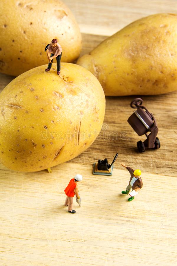 Hard team die de beste aardappel mogelijk werken te maken royalty-vrije stock foto