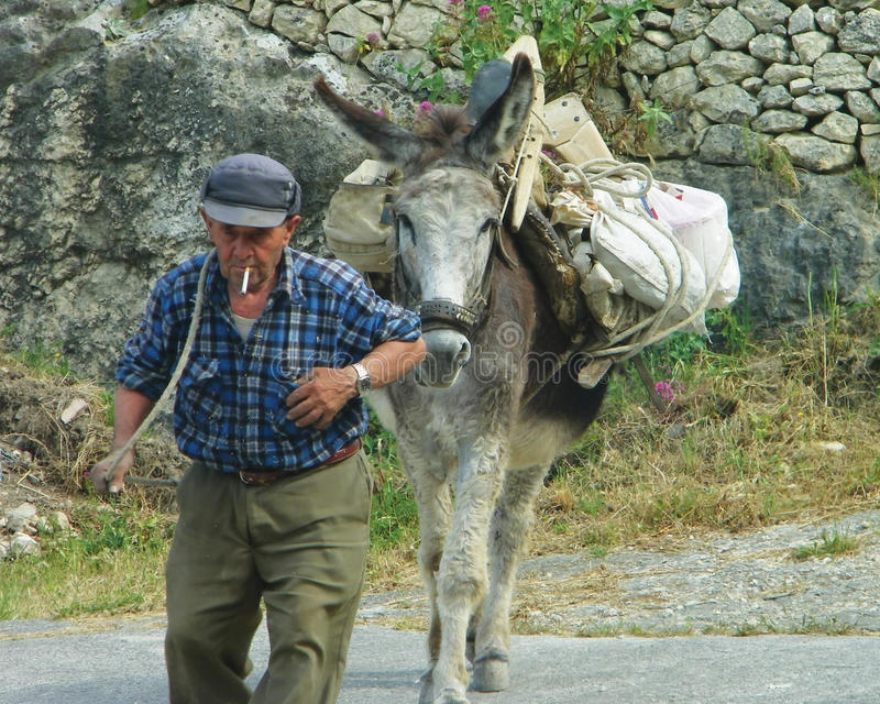Hard Working Man with Mule stock images