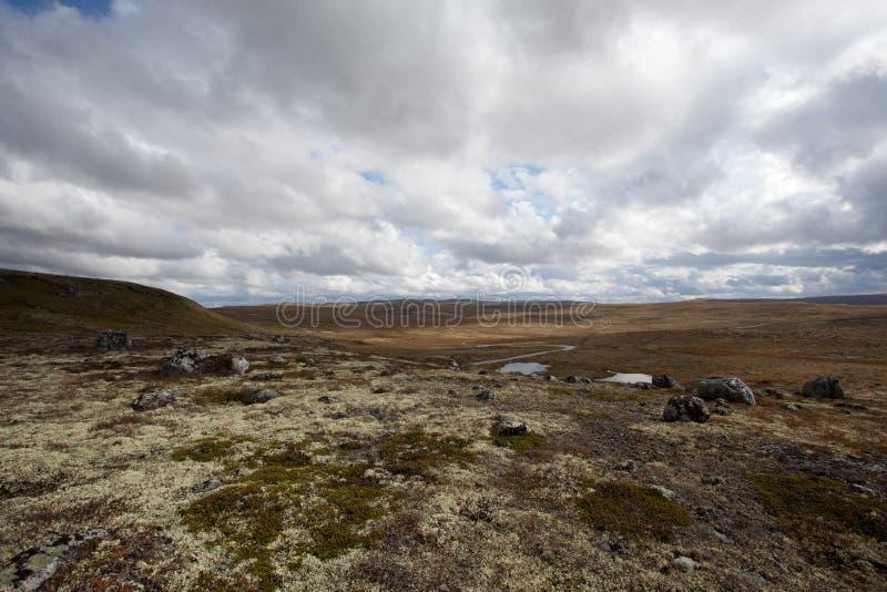 hardangervidda国家公园 免版税库存图片