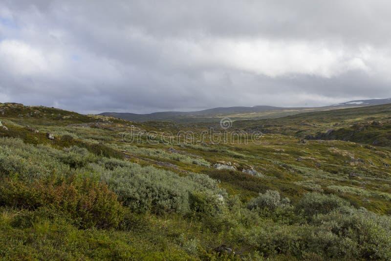 Hardangervidda, Noruega imagen de archivo libre de regalías