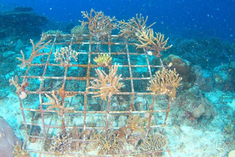 Harde koralen die op ijzerkooi groeien stock afbeeldingen