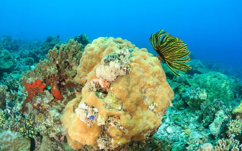 Harde koralen en veersterren royalty-vrije stock afbeelding